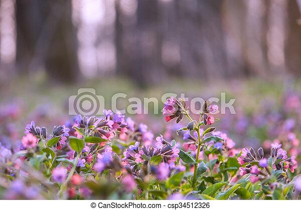 flowers - csp34512326