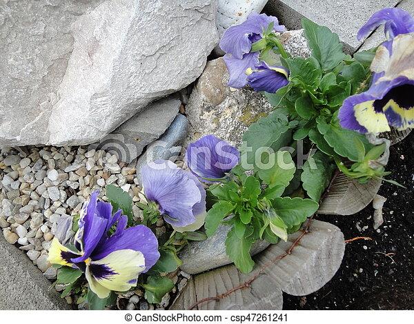 Flowers - csp47261241