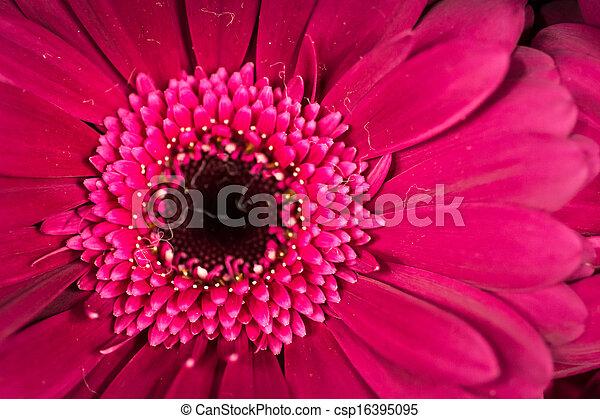 Flowers - csp16395095