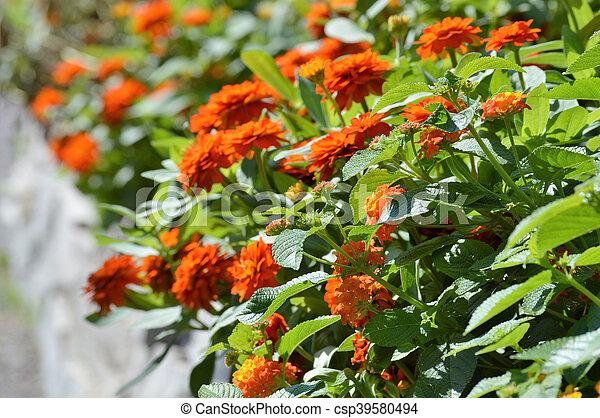 Flowers - csp39580494