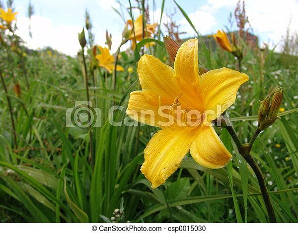 flowers - csp0015030