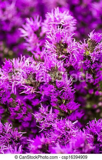 Flowers - csp16394909