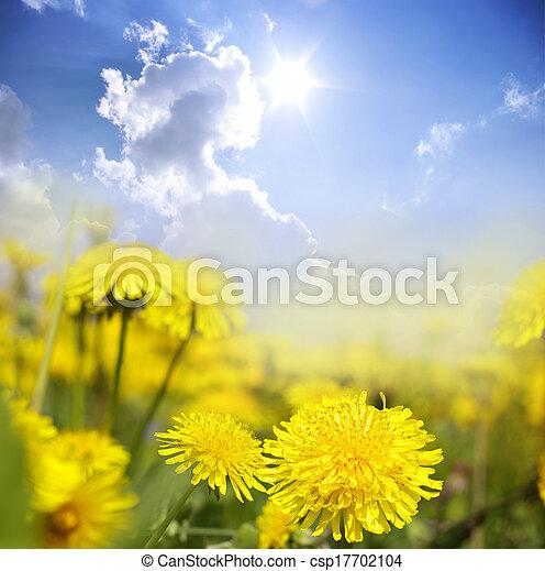 flowers - csp17702104