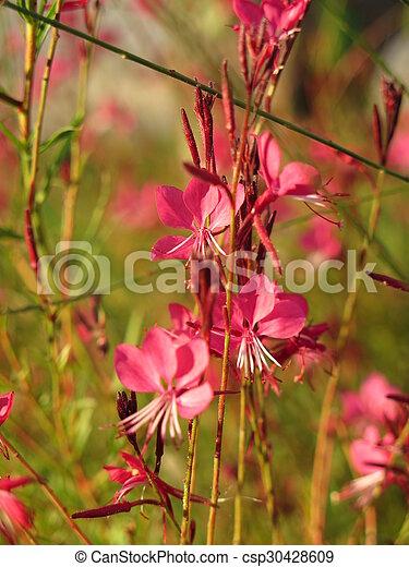flowers - csp30428609