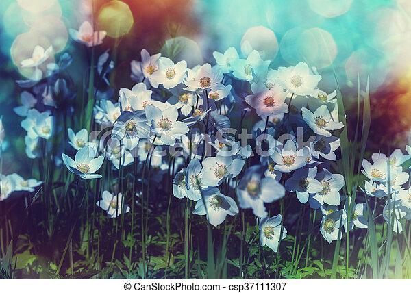Flowers - csp37111307