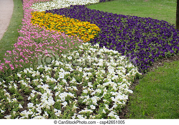 Flowers - csp42651005