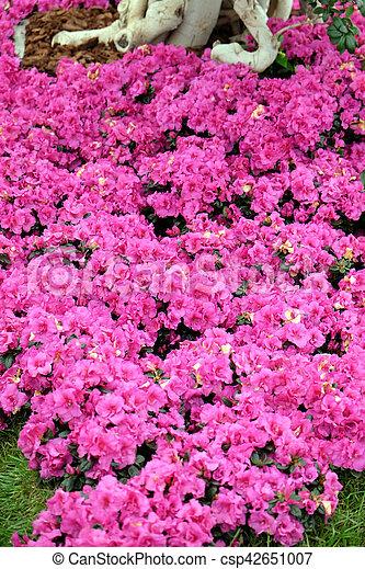 Flowers - csp42651007