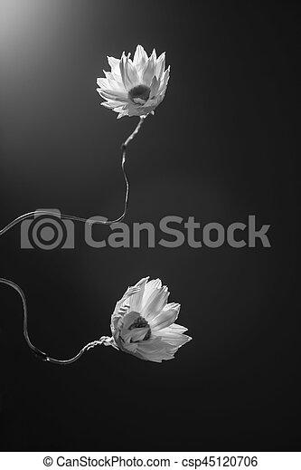 Flowers - csp45120706
