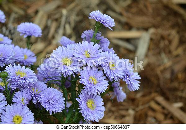 Flowers - csp50664837
