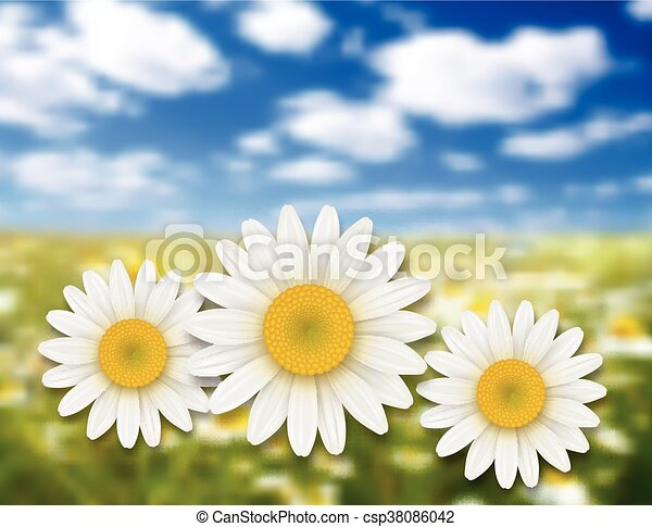 Daisy Flower Line Drawing : Flowers summer background chamomile eps