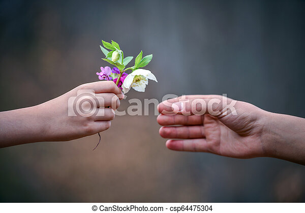 flowers to gift - csp64475304