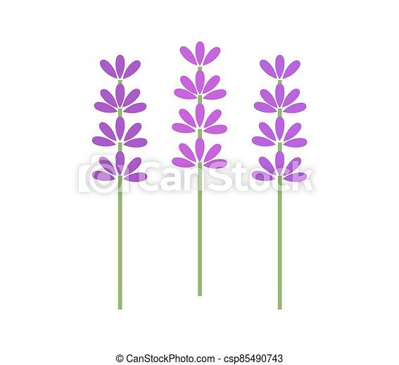 flowers., tres, simbólico, lavanda - csp85490743