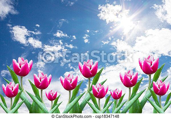 flowers Tulip - csp18347148