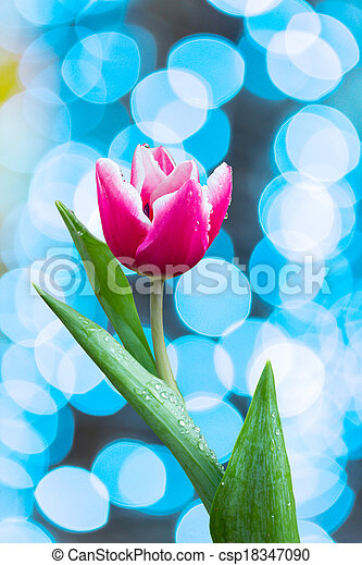 flowers Tulip - csp18347090