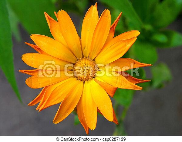Flowers yellow center yellow orange flowers green background flowers yellow csp0287139 mightylinksfo