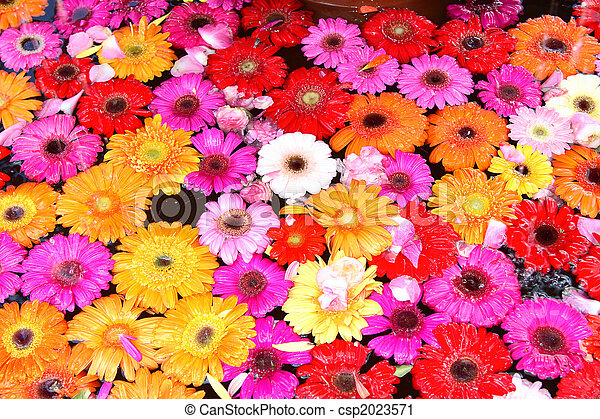 flowery background colorful flowery background in water with petals