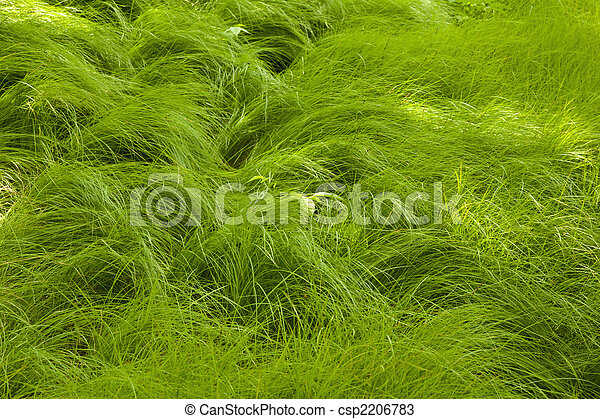 Flowing Grass at Carver\'s Gap - csp2206783