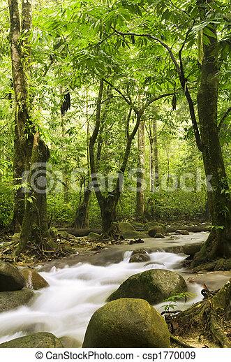 Grüner Wald und Fluss - csp1770009