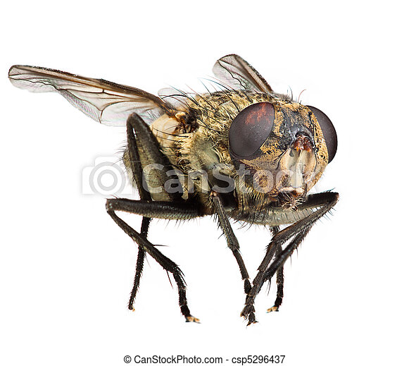 flue, rykke sammen - csp5296437