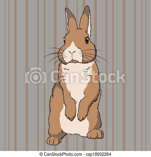 Rabbit illustrations drawings #1