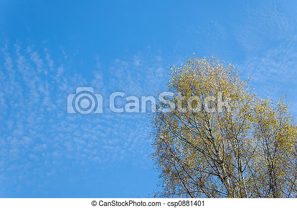 Fluffy Clouds and Birch - csp0881401
