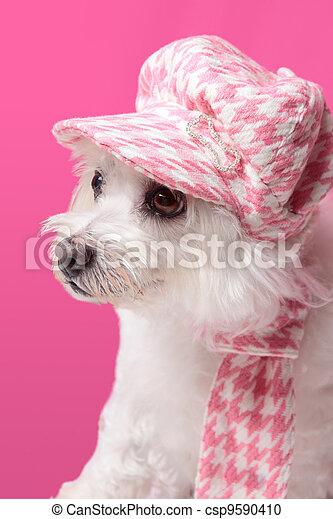 Fluffy dog wearing winter fashion - csp9590410