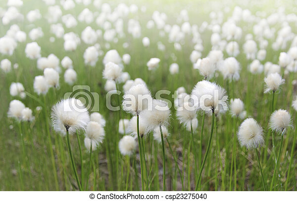 White fluffy flowers on a light green blurred background fluffy flowers csp23275040 mightylinksfo