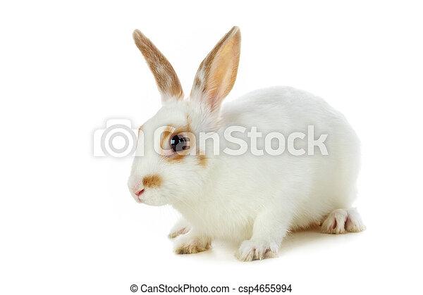 Fluffy mammal - csp4655994