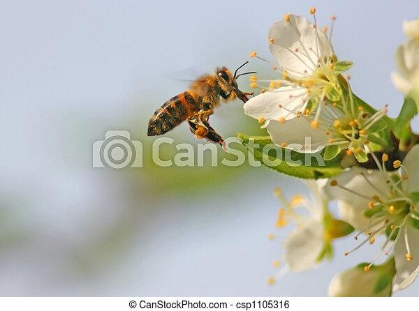 flug, biene - csp1105316