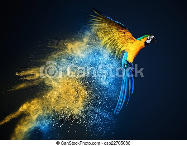 Flying Ara parrot over colourful powder explosion  - csp22705086