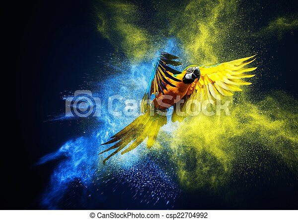 Flying Ara parrot over colourful powder explosion - csp22704992