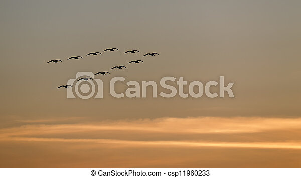 flying at sunset - csp11960233