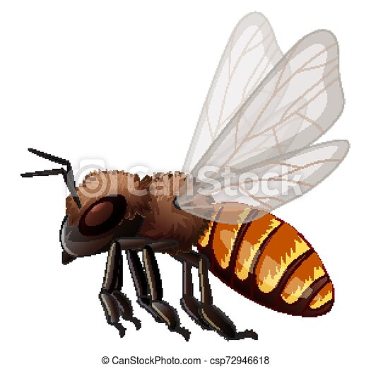 Flying bee on white background - csp72946618