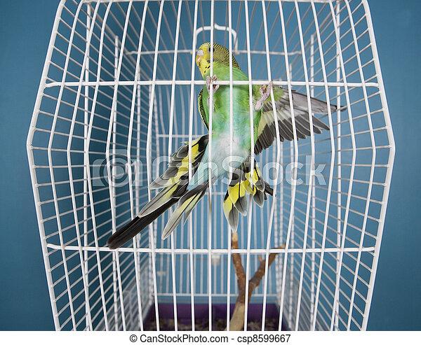 Flying Pet Bird - csp8599667