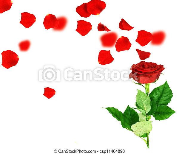 Flying Petals - csp11464898