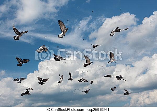 Flying pigeons - csp25919861
