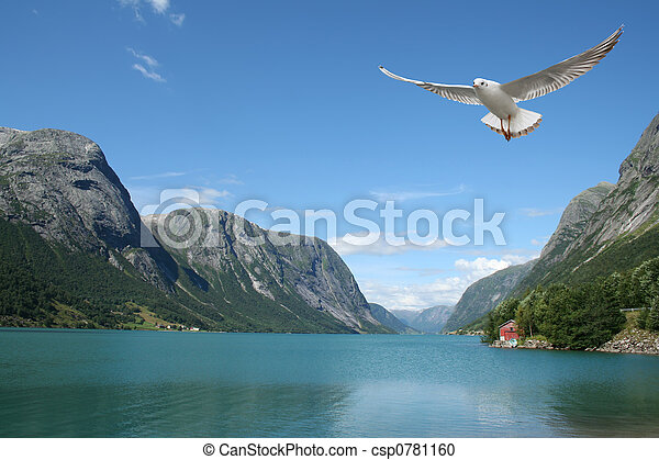flying seagull and norwegian fjords - csp0781160
