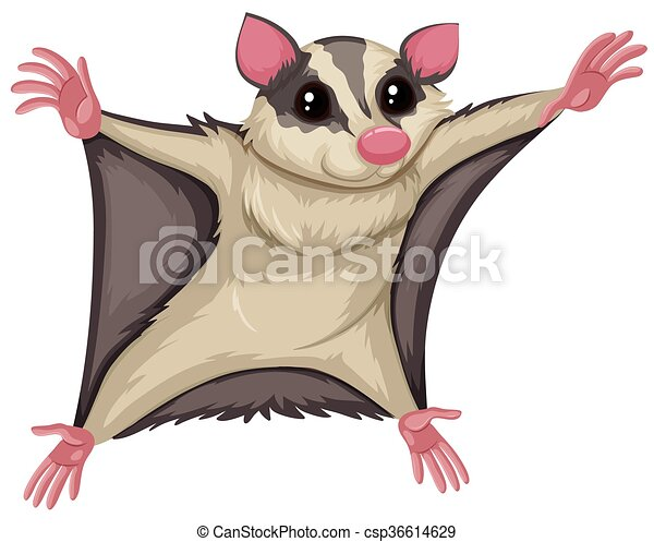 Flying squirrel with happy face - csp36614629