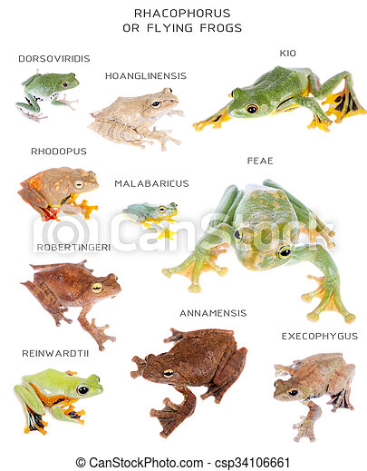 Flying tree frogs set on white - csp34106661