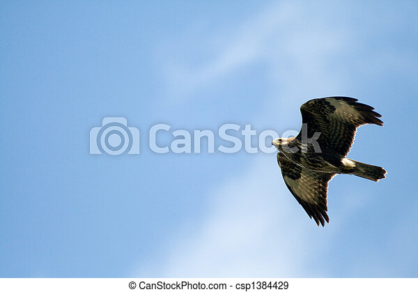 flying wild birds - csp1384429