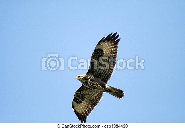 flying wild birds - csp1384430