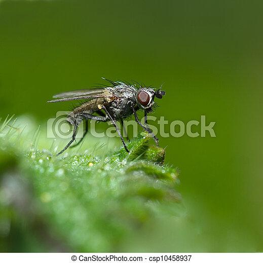 Fly,macro - csp10458937