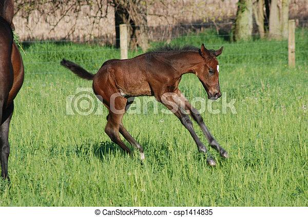 Foal playtime - csp1414835
