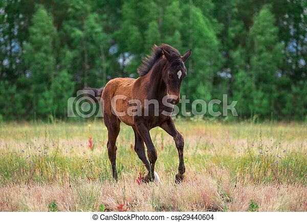 foal - csp29440604