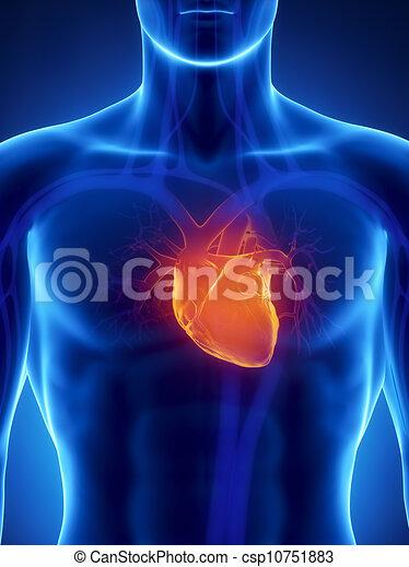 Focused on human heart - csp10751883