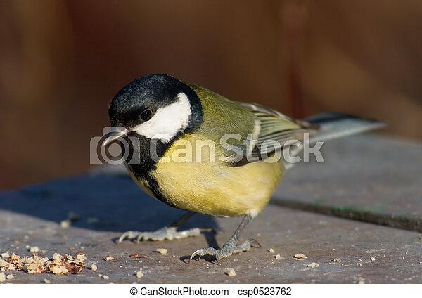 foder, tit, sted, fugl - csp0523762