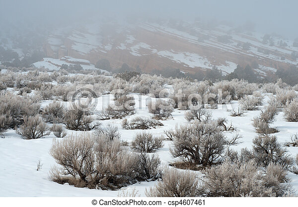 Fog and Snow in the High Desert - csp4607461