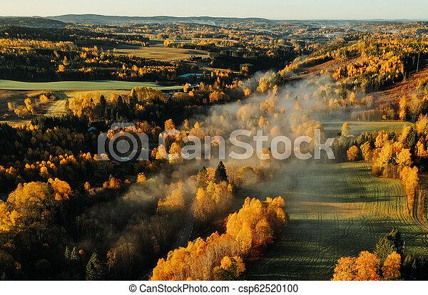 Fog forest autumn sunrise - csp62520100