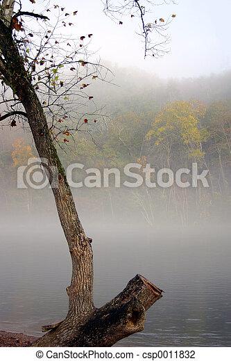 Fog in fall - csp0011832