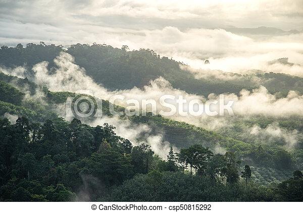 Fog in morning - csp50815292